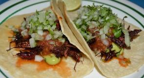 Get Your Grasshopper Tacos and Margaritas On at Taqueria Feliz in Manayunk