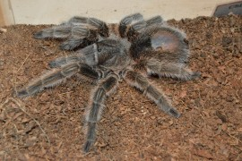 Imagine Tarantulas Climbing All Over You at Academy of Natural Sciences of Drexel University