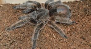 Imagine Tarantulas Climbing All Over You at Academy of Natural Sciences of Drexel University